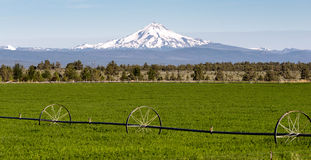 Mount Jefferson Stands Majestic Oregon Cascade Mountain Range Royalty Free Stock Images