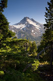 Mount Jefferson Vertical Forest Green Tree Scene Royalty Free Stock Image