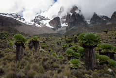 Mount Kenya Royalty Free Stock Photo
