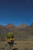 Mount Kenya 3. Mount Kenya with its tree peaks - from left to right - Lenana, Batian, Nelion stock image
