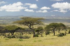 Mount Kenya och ensamt akaciaträd på Lewa naturvård, Kenya, Afrika Royaltyfri Bild