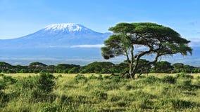 Mount Kilimanjaro в Кении Стоковые Изображения RF