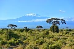 Mount Kilimanjaro Arkivfoto