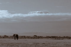 Mount Kilimanjaro from Amboseli Royalty Free Stock Images