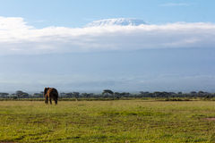 Mount Kilimanjaro from Amboseli Stock Image