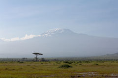 Mount Kilimanjaro from Amboseli Stock Photos