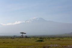 Mount Kilimanjaro from Amboseli Stock Photos