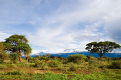 Mount Kilimanjaro. Highest mountain in Africa Royalty Free Stock Image
