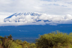Mount Kilimanjaro. Highest mountain in Africa Stock Photos