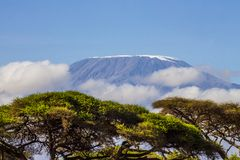 Mount Kilimanjaro,the highest mountain in Africa. Mount Kilimanjaro,the highest mountain in Africa taken from the Kenya side stock photos