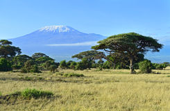 Mount Kilimanjaro. In Kenya Amboseli National Park Stock Photography