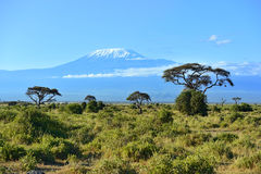 Mount Kilimanjaro. In Kenya Amboseli National Park Stock Photo