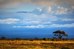 Mount Kilimanjaro. Savanna in Amboseli, Kenya royalty free stock photography
