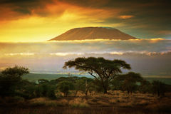 Mount Kilimanjaro. Savanna in Amboseli, Kenya. Mount Kilimanjaro and clouds line at sunset, view from savanna landscape in Amboseli, Kenya, Africa royalty free stock photography