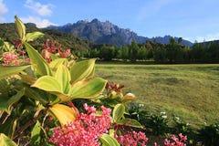 Mount Kinabalu с цветком стоковая фотография