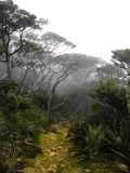 Mount Kinabalu Cloud forest Borneo Royalty Free Stock Images