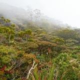 Mount Kinabalu stock image