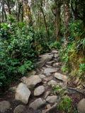 Mount Kinabalu Trail, Sabah, Malaysia Stock Photos