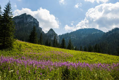 mount krajobrazowa s Fotografia Stock