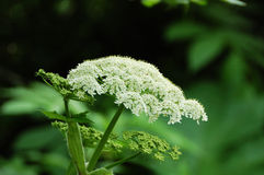 mount kwiat Obraz Royalty Free