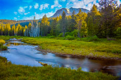 Mount Lassen. Beautiful creek with Mount Lassen rising above the trees Royalty Free Stock Photos