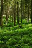 mount leśna Obraz Stock