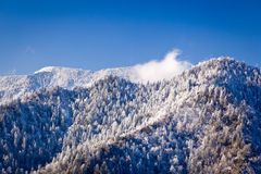 Mount leconte in snow in smokies Royalty Free Stock Photo