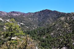 Mount Lemmon, Tucson, Arizona, United States. Scenic landscape view with vegetation of Mount Lemmon located in Tucson, Arizona in the United States stock photography