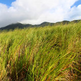 Mount Liamuiga in Saint Kitts Royalty Free Stock Photos
