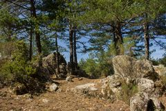 Mount Limbara Sardenia, Italy - national park view. In summer time stock photo