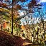 Mount Lofty Botanic Gardens, South Australia Stock Photos