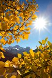 Mount Lougheed in the autumn. Mountain group with fall aspens Stock Photography