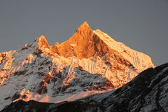 Mount Machhapuchhre Royalty Free Stock Image