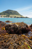 Mount Maunganui beach scenes. Royalty Free Stock Image
