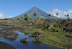 Mount Mayon Volcano. In Bicol, Philippines stock photo