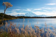 Mount McKinley от пруда отражения Стоковая Фотография