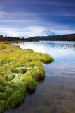 Mount McKinley from Wonder Lake with green grass Royalty Free Stock Image