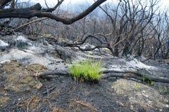 Mount Meru in Arusha National Park, Tanzania. Dead trees at Mount Meru in Arusha National Park, Tanzania stock photography