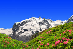 Mount Monte Rosa. Swiss Alps Stock Photography