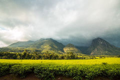 Mount Mulanje in Malawi with tea plantation. Mount Mulanje with tea plantation in the foreground, landscape with rainy clouds covering the mountain tops royalty free stock images