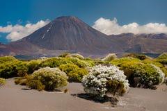 Mount Ngauruhoe Stock Images