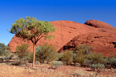 Mount Olgas Royalty Free Stock Photography