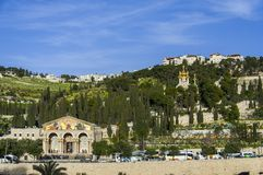 Mount Olives Royalty Free Stock Photography