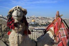 Mount of Olives Jerusalem royaltyfria bilder