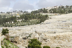 Mount of Olives in Jerusalem . Stock Photos