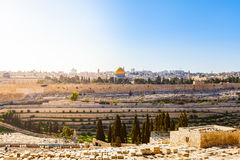 Mount of Olives and the old Jewish cemetery in Jerusalem, Israel. Panoramic view of the old town, Muslim Quarter and Temple Mount. Dome of the Rock Royalty Free Stock Photography