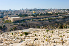 Mount of olives Stock Photos