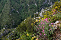 Mount Olympus Stock Images