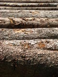 Mount Pilatus Logs 01 stock photography