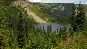 Mount Rainer stock images
